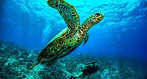 Tauchen, Dusit Thani Maldives