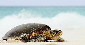 Nachhaltig, Fregate Island Private