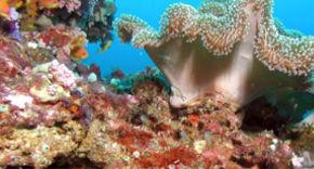 Wasserwelt, Victoria Beachcomber Mauritius