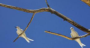 Vogelparadies auf Bird Island, Seychellen