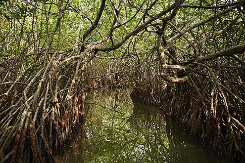 Regenwald auf der Insel Sri Lanka, erleben auf einer Rundreise