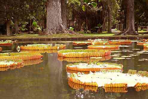 beliebtes Ausflugsziel auf der Insel Mauritius