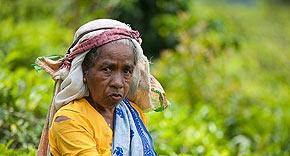 Teeplantagen Nuwara Eliya, Sri Lanka
