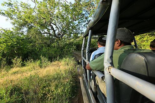 Safari Erlebnis im Jeep durch den Yala Nationalpark auf der Insel Sri Lanka