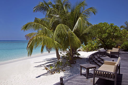 Kokospalmen auf der Insel Coco Palm Dhuni Kolhu, Südliches Baa Atoll