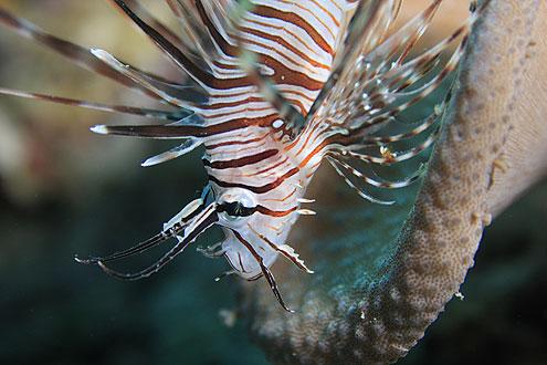 Schnorcheln auf den Malediven und exotische Fische entdecken