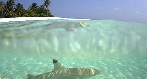 Tauchen auf der Insel Mirihi, Malediven