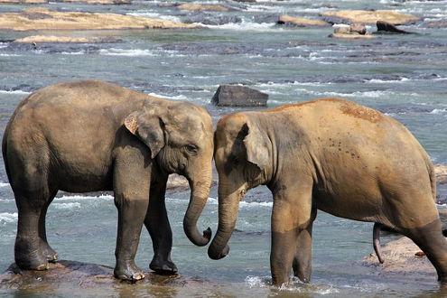 Elefantenwaisenhaus Pinnawela auf der Insel Sri Lanka