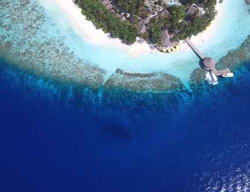 Die prachtvolle Flora und Fauna der Malediven