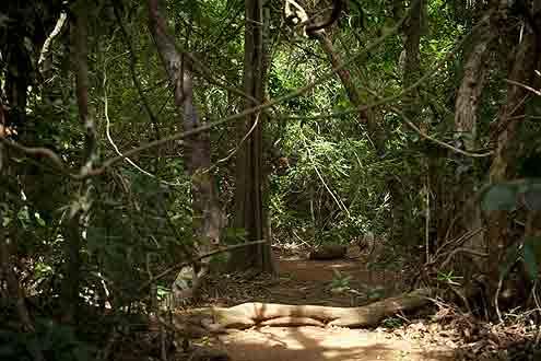 Urwald auf Sri Lanka