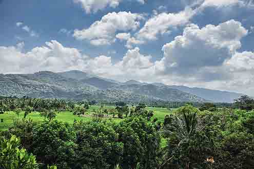 dichter Wald auf Sri Lanka