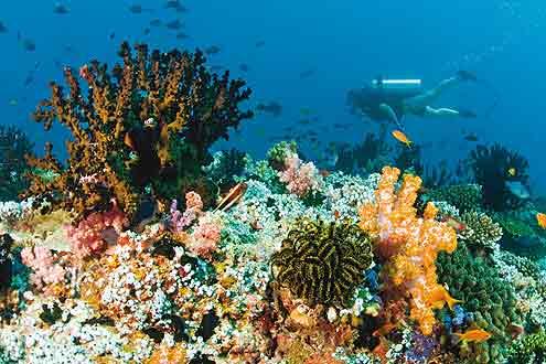 Hausriff bei Baros Maldives im Nord Male Atoll